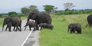 Budget Gorilla Trekking Uganda Safari Tour Cheap
