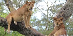 Camping safari Uganda