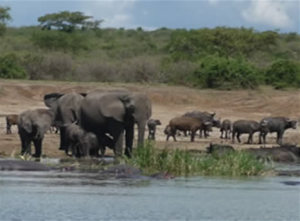 kazinga-channel-wildlife