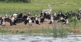 birding-lake-bunyonyi