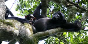 Silverback Gorilla Safari