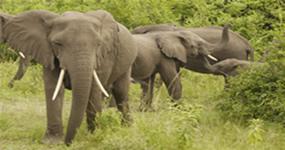 Gorilas & Wildlife safari