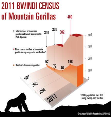 gorilla-population-increase