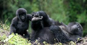 3 day gorilla tour
