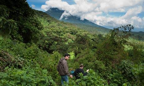 Gorilla-tracking-Volcanoes