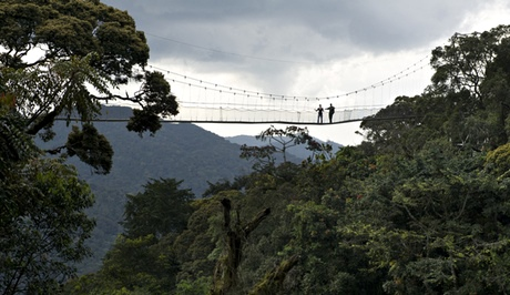 Hikers on Nyungwe canopy walk