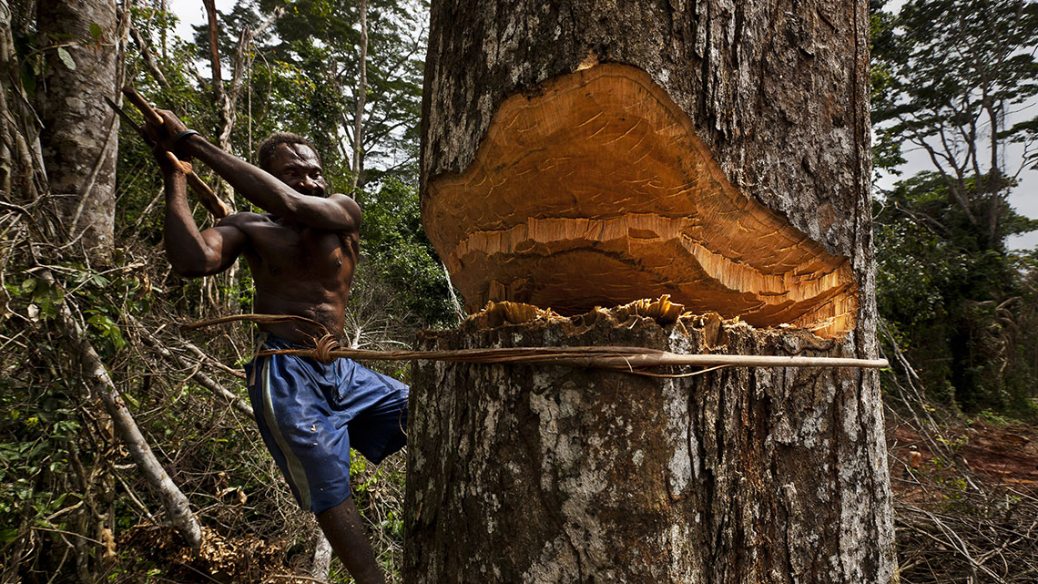 Cutting down forests for Timber, Settlement & Agriculture